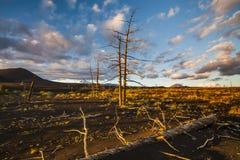 无生命的树在死的森林里 图库摄影