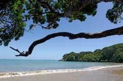 无疑海湾北国新西兰 免版税图库摄影