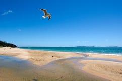 无疑海湾新西兰 库存图片