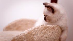 无知的小猫确定世界 免版税图库摄影