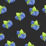 无缝传染媒介的黑莓 库存例证