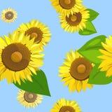 无缝向日葵的背景 库存图片
