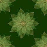 无缝圣诞节花卉绿色的模式 库存图片