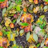 无缝弄湿叶子纹理 背景,自然 免版税库存图片