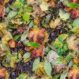 无缝弄湿叶子纹理 背景,自然 免版税库存照片