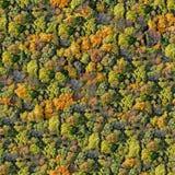无缝森林的模式 库存照片