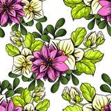 无缝植物的模式 免版税库存照片