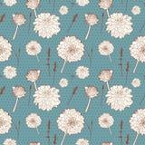 无缝的与白色翠菊的葡萄酒蓝色花卉样式 免版税库存图片