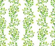 无缝的与绿色的葡萄酒装饰样式卷曲并且离开 水彩 免版税库存图片