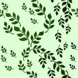 无缝的与绿色装饰叶子分支的传染媒介花卉样式 库存例证