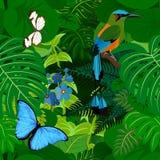 无缝的与motmot和蝴蝶的传染媒介热带雨林密林背景 向量例证