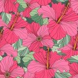 无缝的传染媒介花卉样式 图库摄影