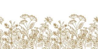 无缝的传染媒介花卉边界用黑白色手拉的草本和野花 库存例证