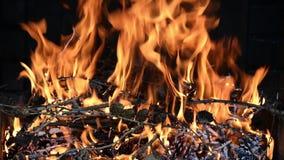 无缝的圈、关闭与火焰的火,小木分支和杉木锥体-录影HD 股票视频
