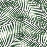 无缝的在白色背景的样式绿色异乎寻常的棕榈热带叶子 免版税库存照片