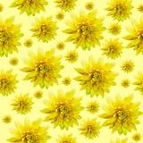 无缝的无限黄色花卉背景 对设计和打印 自然菊花背景  库存图片