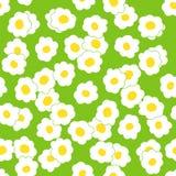 无缝的春黄菊花卉样式 库存图片
