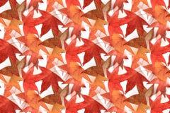无缝的枫叶设计2 免版税库存图片