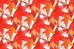 无缝的枫叶设计1 库存图片