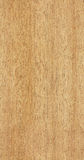 无缝的柚木树纹理 免版税库存照片