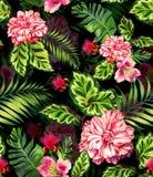 无缝的样式与上升了,山茶花,多汁植物 免版税库存照片