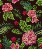 无缝的样式与上升了,山茶花,多汁植物 库存照片