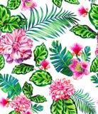无缝的样式与上升了,山茶花,多汁植物 免版税库存图片