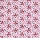 无缝的样式开花万寿菊,桃红色 向量例证