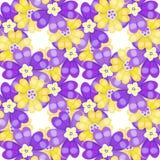 无缝的样式春天西洋樱草樱草属紫色花 Vecto 免版税库存图片