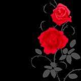 无缝的样式有花玫瑰花卉背景 免版税图库摄影