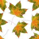 无缝的样式枫叶黄色红色秋天 免版税库存照片
