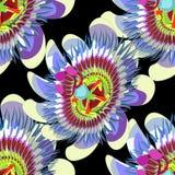无缝的样式激情花蓝色热带水果传染媒介 免版税库存图片
