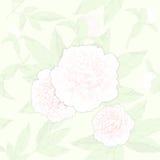 无缝的样式牡丹和芽在轻的背景 也corel凹道例证向量 免版税库存图片