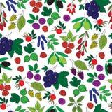 无缝的样式用五颜六色的莓果 图库摄影