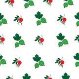 无缝的样式用五颜六色的莓果 库存图片