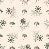 无缝的样式用图画莳萝或茴香 库存图片