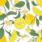无缝的样式用新鲜的水多的柠檬、整体和裁减成片断、花和叶子在白色背景 靠山 向量例证