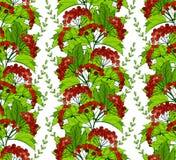 无缝的样式用荚莲属的植物莓果和叶子 免版税库存图片