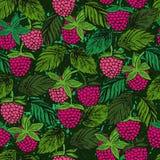 无缝的样式用莓着墨色的手拉的莓果 向量例证