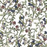无缝的样式用蓝莓和越橘 免版税库存照片