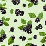 无缝的样式用水多的黑莓 也corel凹道例证向量 免版税库存图片