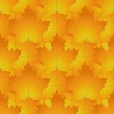 无缝的样式由红色和橙色槭树制成离开,秋天col 库存照片