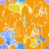 无缝的样式的例证与水彩虹膜的 在橙色背景的夏天花 花卉包装纸 免版税图库摄影