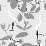无缝的样式,与花卉样式的背景与feijoa开花的花 皇族释放例证