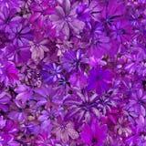 无缝的样式,叶子,夏天,紫罗兰,热,植物群,墙纸 免版税库存图片