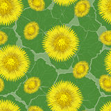 无缝的样式,春天黄色花  库存图片