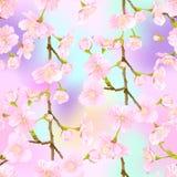 无缝的样式,背景用开花的樱桃 皇族释放例证