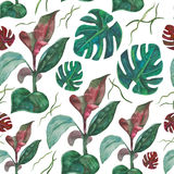 无缝的样式水彩热带叶子 库存图片