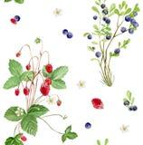 无缝的样式水彩莓果重复的瓦片  向量例证