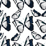 无缝的样式morpho butterfliese蝴蝶国君 库存照片